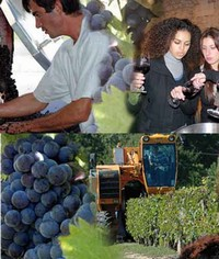 Find a job in wine, vineyard, sales, marketing, oenologue