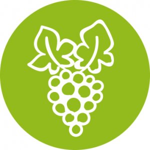 formations vigne et vins